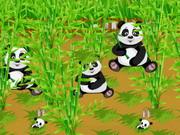 Pandák a vadfarmon